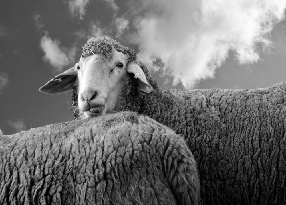 Efekt Dunninga-Krugera – na czym polega?